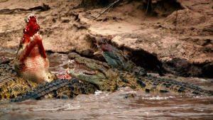 خاص: أشرس الكائنات في العالم صورة