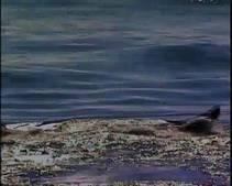 The Blue Whale photo