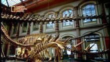 Richard Dawkins on Fossils & Darwin show