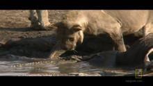 Predators in the Water show