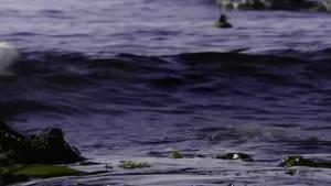 The Secret Forest Harlequin Ducks photo