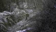 The Secret Forest Amur Leopard show