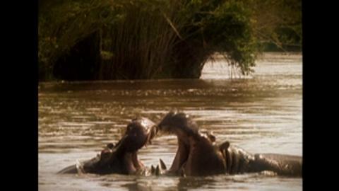 Hippo Takeover