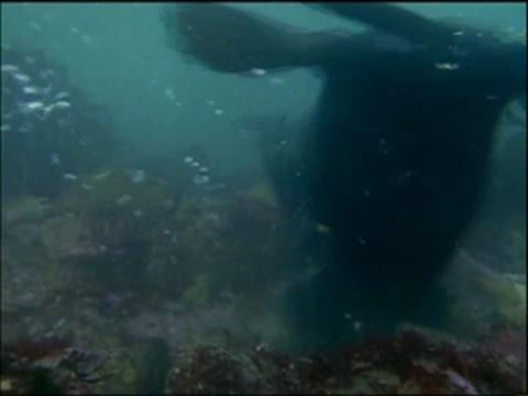 Big Sur's Sea Otters