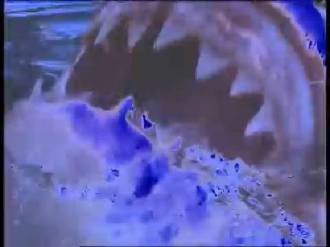 How strong is a shark's bite?