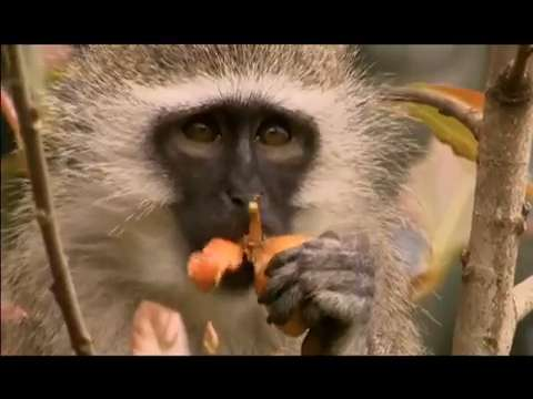 Sisterhood within monkey gangs