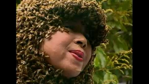 Bee Woman and Bear Attack