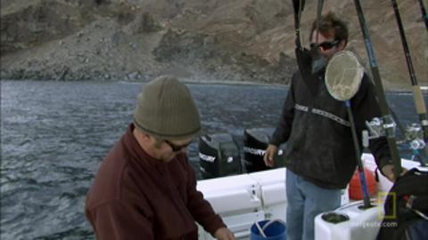 Great White Shark bites on hook